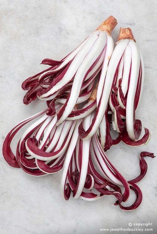 Chicory 'Rossa di Treviso (Tardiva)'. Radicchio