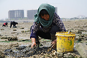 In Shandong province near Rizhao, old women searching for sea shells on the bed of the estuary at low tide. Pictured with massive construction behind. Old and new, traditions and modernity on collission in this new world of mega cities and mass industry. These women are picking shellfish in the traditional way of ages. Shandong province near Rizhao, China