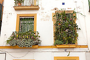 Unusual window box display of cacti in Barrio Macarena, Seville, Spain
