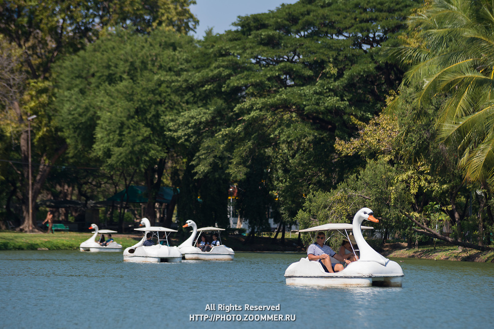 Swan pedal boats in Bangkok Lumpini park, Thailand