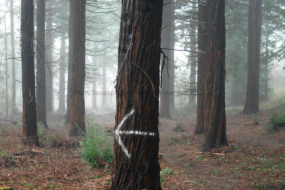 Left Arrow on Tree