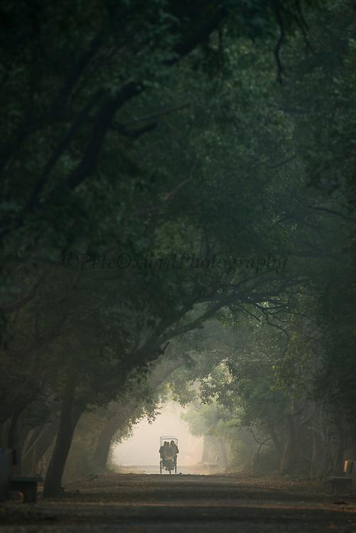 Rickshaw at dawn<br /> Bharatpur National Park <br /> Rajasthan, India