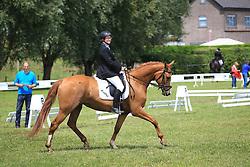 Golzenleuchter Tanja (BEL) - Kadence van de Snydershoeve<br /> SBB Competitie Jonge Paarden - Nationaal Kampioenschap - Kieldrecht 2014<br /> © Dirk Caremans