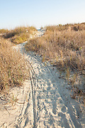 Sand pathway to the beach on Sullivan's Island, SC.
