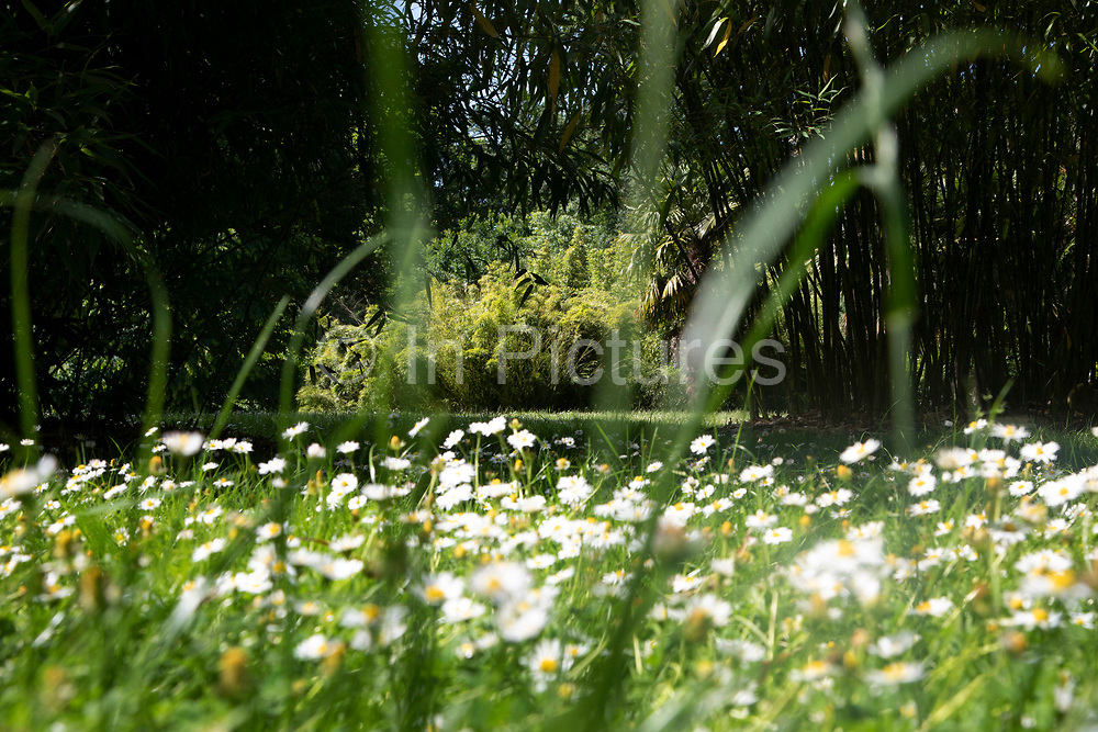 View through bamboo over daisies at Kew Gardens in London, United Kingdom. The Royal Botanic Gardens, Kew, usually referred to simply as Kew Gardens, are 121 hectares of botanical gardens and glasshouses between Richmond and Kew in southwest London. It is an internationally important botanical research and education institution with 700 staff, receiving around 2 million visitors per year. Its living collections include more than 30,000 different kinds of plants.