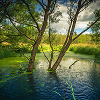 Botanicals: Wetlands and Marshes