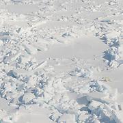 A polar bear (Ursus Maitimus) makes its way over the rugged ice of the Beaufort Sea in Kaktovik, Alaska.