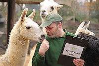 Llamas & Alpacas, ZSL London Zoo Annual Stocktake 2015, Regents Park, London UK, 05 January 2015, Photo By Brett D. Cove