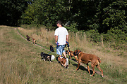"Professional dog walker with seven different dogs. Hampstead Heath (locally known as ""the Heath"") is a large, ancient London park, covering 320 hectares (790 acres). This grassy public space is one of the highest points in London, running from Hampstead to Highgate. The Heath is rambling and hilly, embracing ponds, recent and ancient woodlands."