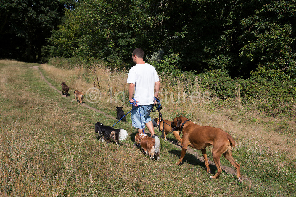 """Professional dog walker with seven different dogs. Hampstead Heath (locally known as """"the Heath"""") is a large, ancient London park, covering 320 hectares (790acres). This grassy public space is one of the highest points in London, running from Hampstead to Highgate. The Heath is rambling and hilly, embracing ponds, recent and ancient woodlands."""