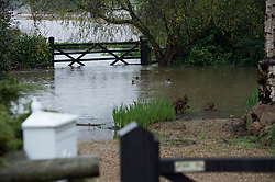 © London News Pictures. 29/04/2012. Ingatestone, UK. Ducks swimming on flood water in the back garden of a property in Ingateston in Essex on April 29, 2012 . The nearby river Wid broke it's banks following torrential rainfall. Photo credit : Ben Cawthra /LNP