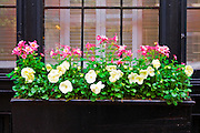 Flower box in a window on Beacon Hill, Boston, Massachusetts