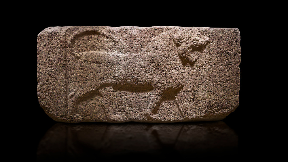 Phygian relief sculpted orthostat stone panel. Andesite, Etimesgut, Ankara. Phrygian. 1200-700 BC. Anatolian Civilisations Museum, Ankara, Turkey.<br /> <br /> Figure of a roaring lion. The cross mark on the chest draws attention. The muscles in his legs are schematic. There are frame edges in front and behind the lion.<br /> <br /> Against a black background. .<br /> <br /> If you prefer you can also buy from our ALAMY PHOTO LIBRARY  Collection visit : https://www.alamy.com/portfolio/paul-williams-funkystock/phrygian-antiquities.html  - Type into the LOWER SEARCH WITHIN GALLERY box to refine search by adding background colour, place, museum etc<br /> <br /> Visit our CLASSICAL WORLD PHOTO COLLECTIONS for more photos to download or buy as wall art prints https://funkystock.photoshelter.com/gallery-collection/Classical-Era-Historic-Sites-Archaeological-Sites-Pictures-Images/C0000g4bSGiDL9rw