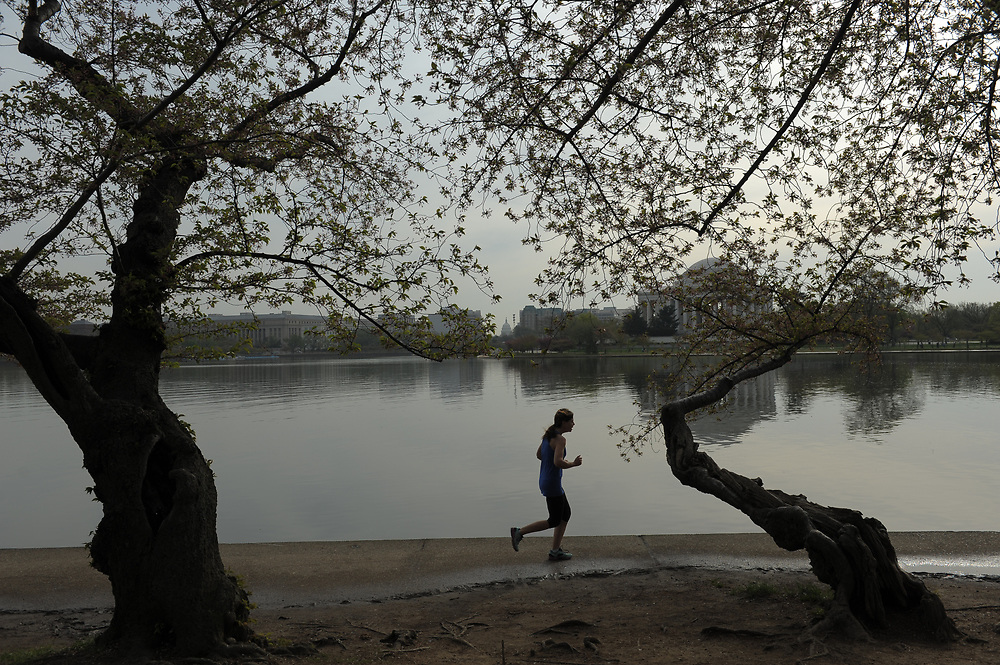 A runner is seen in the early morning along Tidal Basin in Washington, D.C.