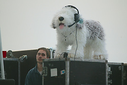 Stuffed Dog With Headphones