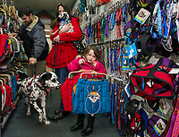 Raina Welch chooses two dog jackets for Domino while shopping with her parents Chris and Samantha Welch and puppy Oreo at the Laconia Pet Center on Union Avenue on Wednesday afternoon.  (Karen Bobotas/for the Laconia Daily Sun)