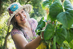 Senior woman looking at green beans in the garden, Altoetting, Bavaria, Germany