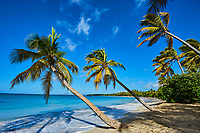 France, Martinique, la Pointe Sud, Sainte Anne, la plage de Grand Anse des Salines // France, Martinique, Sainte Anne, Grand Anse des Salines Beach