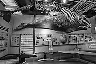 Whale display at the  Cabrillo Marine Aqurium in San Pedro, CA.