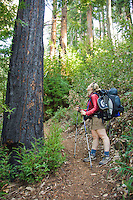 Backpacker checks out a redwood on the Pine Ridge Trail, Big Sur, California.