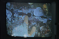 KEVIN BARTRAM/The Daily News.A diver, nearly 100 feet below the surface of the Gulf of Mexico, inspects a cut on the leg of an abandoned offshore platform on Monday, June 27, 2005 in a video image transmitted from the diver's helmet. The platform's eight legs were cut to allow the top half to be removed and placed on the floor of the gulf to form an artificial reef.