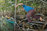 A boy (age 7) climbing on mangrove roots.  Bradley Key, Florida Bay, Everglades National Park..Florida, USA.