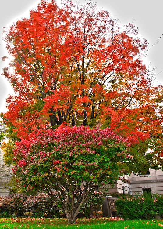 Court House Tree Fall Colors Bloomington Indiana