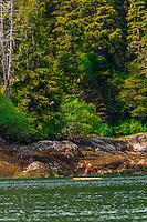 Paddleboarding, Takatz Bay, Chichagof Island, Inside Passage, Southeast Alaska USA.
