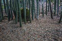 "Hokoku-ji Kamakura is world famous for its bamboo garden containing more than 2000 Moso bamboos trees. Its nickname is Take-dera ""Bamboo Temple"" for that reason.  The bamboo garden is punctuated with stone lanterns, jizo and moss covered stones.  Besides the popular bamboo garden, and teahouse, Hokokuji also has a often overlooked Zen garden   Ashikaga Ietoki, ordered Zen priest Tengan Eko to establish Hokoku-ji. This temple became the family temple of the Ashikaga clan. Tengan was a disciple of Mugaku Sogen a contemporary of famous garden designer Muso Kokushi."