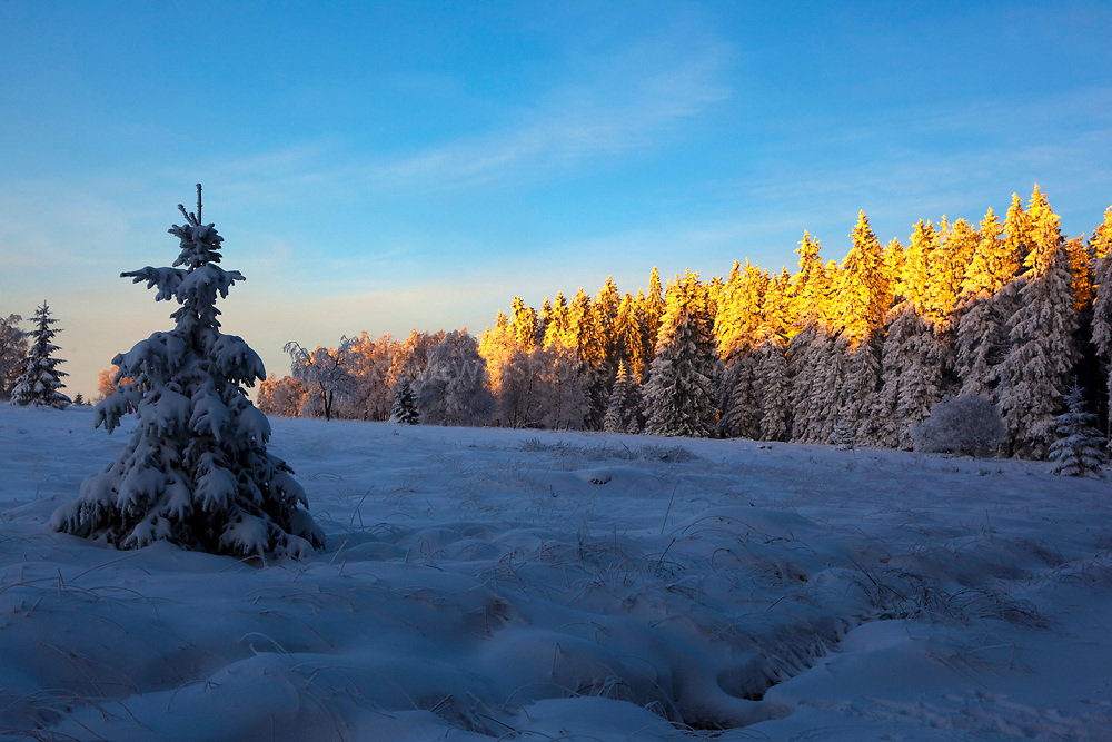 December sunset and snow in the forest, near the Baraque Michel area of the Haute Fagnes, or High Fens in the Belgian Ardennes.