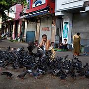 May 09, 2013 - Yangon, Myanmar: A local man feeds corn to pigeons en central Yangon. CREDIT: Paulo Nunes dos Santos