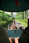 View from inside Horse drawn cart in tree lined avenue, Kedu Valley, South Central Java, Java, Indonesia, Southeast Asia