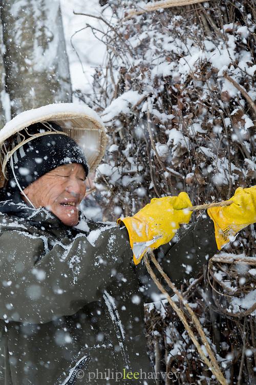 Senior man working in snow, Nozawaonsen, Japan