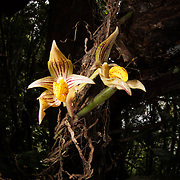 Gunung Bondang Expedition, Central Kalimantan, Borneo, Indonesia. Run by the Heart of Borneo Rainforest Foundation.