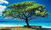 photographie touristique en couleur d'une jeune femme Kanak marchant tranquilement sur la plage de Yedjélé à Maré Nengoné. Un arbre médicinal ( faux tabac ) est situé au premier plan de l'image avec un banc en bois.