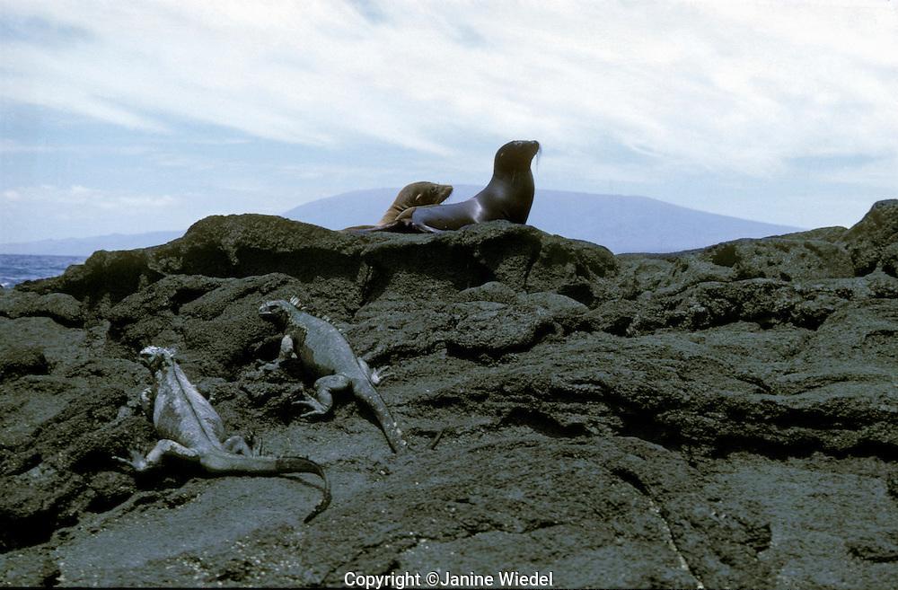 The Galapagos Island off the coast of Equador.