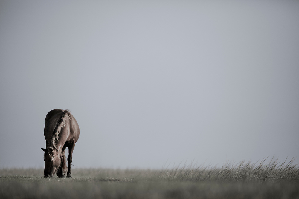 """""""In solitude the mind gains strength and learns to lean upon itself"""" ~ Laurence Sterne<br /> <br /> Tracie Spence's fine art photography series of The Spanish Wild Mustangs."""
