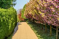 Driveway lined by Blooming Tree, Bridgehamton. Hamptons, NY