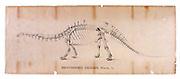 Original Print from Marsh drawing of Brontosaurus.