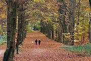Nederland, Groesbeek, 15-11-2020 Herfstdag in het Groesbeekse bos .Foto: ANP/ Hollandse Hoogte/ Flip Franssen