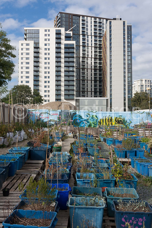 New apartments rise over the fence of the Grow Elephant Community Garden, on the New Kent Road at Elephant & Castle, Southwark on 11th October 2016, London, England. Surrounded by the arrival of gentrified apartments, many bought by foreign investors, Grow Elephant is on New Kent Road and occupying the former Heygate estate. Regular gardening workshops and volunteering sessions are organised making it an important social space for the local residents.