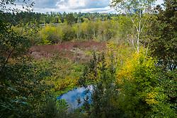 USA, Washington, Bellevue. Mercer Slough Nature Park.