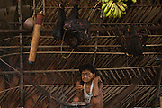 Huaorani woman, Mima in her traditional hut. A hunted peccary is hanging in a basket over the fire to smake. The blowgun dart holder always hangs over the fire to keep it dry. She is sitting in a hammock which is usually the only furniture in the home.<br /> Bameno Community. Yasuni National Park.<br /> Amazon rainforest, ECUADOR.  South America<br /> This Indian tribe were basically uncontacted until 1956 when missionaries from the Summer Institute of Linguistics made contact with them. However there are still some groups from the tribe that remain uncontacted.  They are known as the Tagaeri & Taromenane. Traditionally these Indians were very hostile and killed many people who tried to enter into their territory. Their territory is in the Yasuni National Park which is now also being exploited for oil.