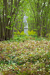The Nuttery at Sissinghurst with Epimedium × versicolor 'Sulphureum' in the foreground. Statue of Dionysus