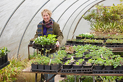 Carol Klein carrying tray of Anemone nemorosa out of the polytunnel