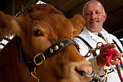 David Cormack is something of a celebrity in the cattle-breeding world, not only by dint of his family (his father was stockman to Lord Elgin), but also because in 2007 Cormack took an unprecedented five prizes with a four-year-old Limousin cow, Newstart Upsydaisy, at the Royal Show. Roughly the equivalent of a football club winning five major cups in a season, this raised the cow's value from about £10,000 to £41,000 when she was sold. The Great Yorkshire Show, one of Britain's biggest agricultural shows. Its famous for its competitive displays of livestock. The event, established in 1837, attracts over 125 000 visitors a year and has over 10 000 entries to its pedigree competitions ranging from pigeons and rabbits to bulls and shire horses.