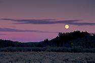 Harvest moon rises at sunset over Aspen and Pine trees, Grand Teton Nat'l. Pk., WYOMING