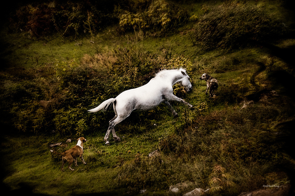 Horse bothered by dogs in Bajram Curri, Albania