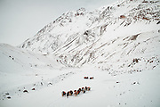 Walking on the frozen Wakhan river, covered up in snow, a Kyrgyz caravan on its way to the lower valley.From Kher Metek to Langar...Trekking back down from the Little Pamir, with yak caravan, over the frozen Wakhan river.