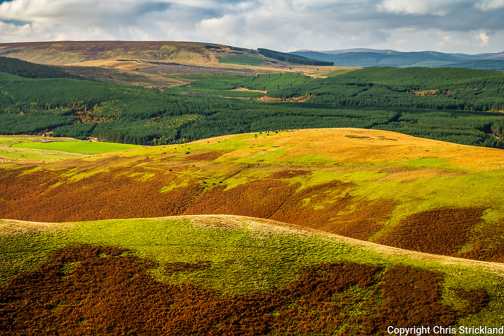Hindhope, Jedburgh, Scottish Borders, UK. 18th October 2018. Looking west across Hindhope to Leithope Forest from Brownhart Law (508m) on the Anglo Scottish Border in the Cheviot Hills.